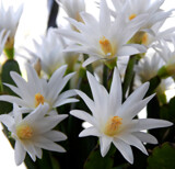 Confused Christmas Cactus by trixxie17, holidays->christmas gallery