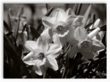 Spring Blooms by theradman, Photography->Flowers gallery