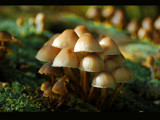 fun guy by gse1978, Photography->Mushrooms gallery