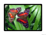 Paint the Sky XVIII by Hottrockin, Photography->Butterflies gallery