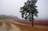 bog fog by solita17, Photography->Landscape gallery