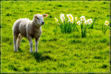 Springtime by corngrowth, photography->animals gallery
