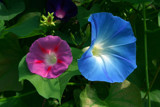 trio by tee, photography->flowers gallery