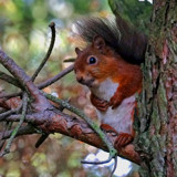 Peek'a'Boo... by biffobear, photography->animals gallery