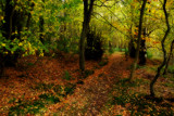 Woodland walk by biffobear, photography->landscape gallery