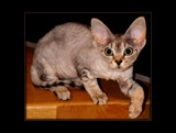 ' Shiver ' 2 by sasraku, photography->pets gallery