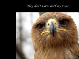 Don't Mess With Me by Hottrockin, Photography->Birds gallery