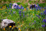Natural Rock Garden by Pistos, photography->flowers gallery