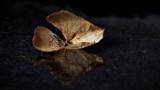 Reflected in depth by coram9, photography->still life gallery