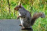 The Intruder by biffobear, photography->animals gallery