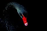 Black Swan by rozem061, photography->birds gallery