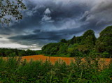 Field of Gold by biffobear, photography->landscape gallery
