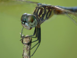 My! What big eyes you have by muki7, photography->insects/spiders gallery