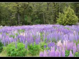 Natures Landscaping by panoramaster, Photography->Flowers gallery