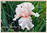 """""""HAPPY MOTHER'S DAY TO ALL THE MOM'S"""" by icedancer, photography->flowers gallery"""