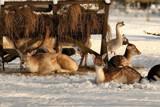 Winter activity by Paul_Gerritsen, Photography->Animals gallery