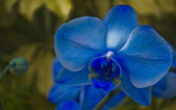 Image: My Blue Valentine