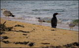 Shoreline Bystanders by Pjsee16, photography->birds gallery
