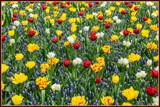 Spring Palette by corngrowth, photography->flowers gallery