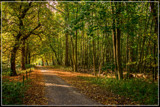 Sunday Morning Stroll by corngrowth, photography->landscape gallery