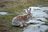 """BIg Jack Getting Darker Yet"" by icedancer, photography->animals gallery"