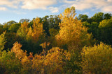 Hillsides of Green and Gold by Silvanus, photography->landscape gallery