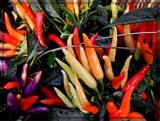 Peppers Anyone? by trixxie17, photography->still life gallery