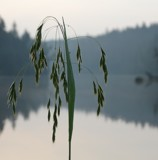 Morning Simplicity # 2 by picardroe, photography->nature gallery