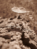 For But A Moment by plantprincess, photography->mushrooms gallery