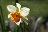 Daffy-down-dilly by LynEve, photography->macro gallery