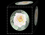 Abstract Rose Works 2 by Roseman_Stan, photography->manipulation gallery