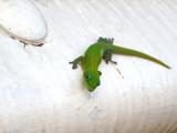 Car Insurance by gitargr8, Photography->Reptiles/amphibians gallery