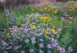 Wildflowers by Pistos, photography->flowers gallery