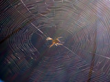 CDE and the world by orgulho, photography->insects/spiders gallery
