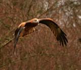 Stealth by biffobear, photography->birds gallery