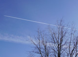 Tree and Plane by starats, Photography->Skies gallery