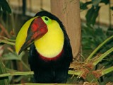 Aviary 12 by RobNevin, Photography->Birds gallery