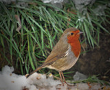 Looking Good by biffobear, Photography->Birds gallery