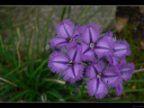One Day Exclusive by panoramaster, Photography->Flowers gallery