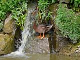 Fowl waterfall by gonedigital, Photography->Waterfalls gallery