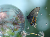 Butterfly and Bubbles by bfrank, photography->manipulation gallery