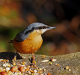 Anybody by biffobear, photography->birds gallery