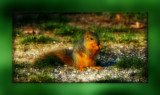 A Cute Nut Cracker by tigger3, photography->animals gallery