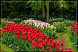 Keukenhof 18 by corngrowth, photography->gardens gallery