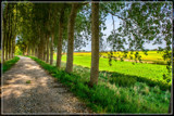 Polder Perspective 2 by corngrowth, photography->landscape gallery