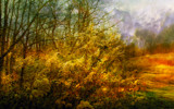 Near Fall by casechaser, photography->manipulation gallery