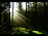 Like The Sun Through The Trees by Phil2001, Photography->Landscape gallery