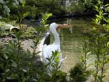 Pelican Pose by fogz, Photography->Birds gallery