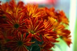 TGIF by biffobear, photography->flowers gallery