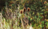 Autumn Grass by slybri, Photography->Nature gallery
